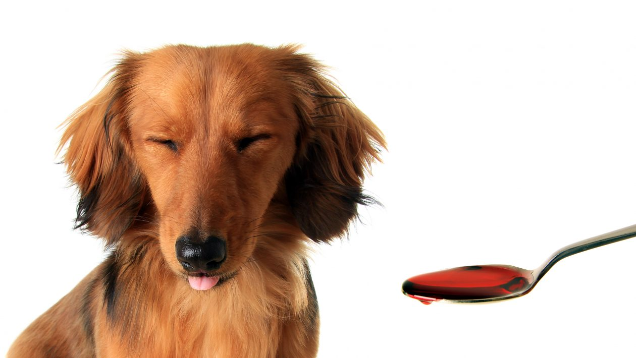 3 Things to Know When Your Pets Need Meds