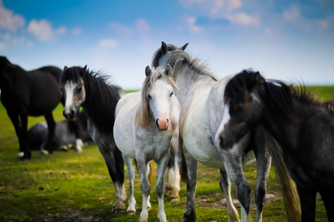 From Mustangs to Appaloosas: The 10 Most Stunning Horse Breeds