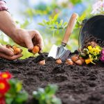 How to Grow a Vegetable Garden From Seeds