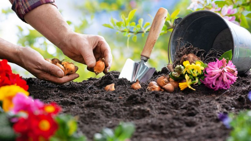 Vegetable Garden From Seeds